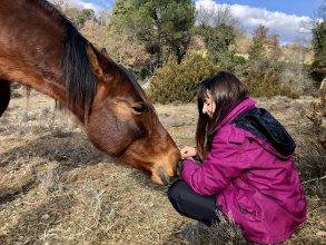 Bases del Coaching asistido con caballos en libertad